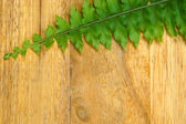 Green leaves of fern on wood. — Stock Photo