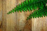 Green leaves of fern on wood. — Stock fotografie