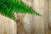 Green leaves of fern on wood. — Foto de Stock