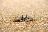 Crab on the beach — Stock Photo