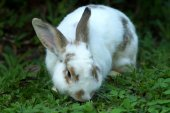 Rabbit on green grass — Stock Photo