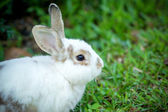 Rabbit on green grass — Stock Photo