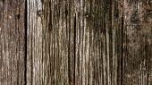 Old wood texture. — Stock Photo