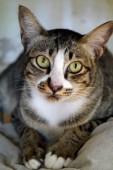 Gato olhando — Fotografia Stock