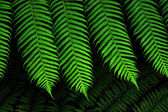 Green Fern leaf — Stock Photo