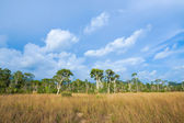 Savanna grasslands and tree, Thailand. — Stock Photo