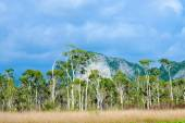 Savanna grasslands and big tree, Thailand. — Stock Photo