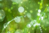 Fresh morning dew on spring grass, natural green light backgroun — Stock Photo