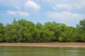 Mangrove forests in Krabi province Thailand — Stock Photo