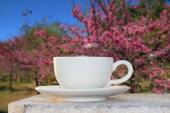 Morning coffee in the Flower Garden — Stock Photo
