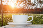 Morning coffee and sunrise in the latex garden — Stock Photo