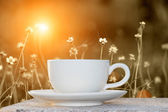 Morning coffee and grass flower — Stock Photo