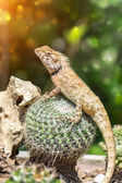 Yellow spiked small lizard sitting on a cactus and watching. — Stock Photo