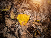 Brown fallen leaves laying on the ground. — Stock Photo