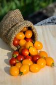 Malé červené a žluté rajče. — Stock fotografie