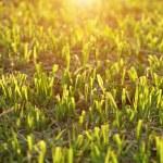 Cut the grass on the football field. — Zdjęcie stockowe #72483581