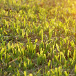 Cut the grass on the football field. — Zdjęcie stockowe #72483583