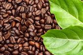 Coffee beans and leave — Stock Photo