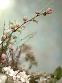 Easter flowers — Stock Photo