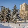 Snow-covered firs trees in city — Stock Photo #56585917