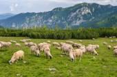 Alpine pastures in Retezat National Park, Carpathians, Romania. — Stock Photo