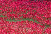 London tower ceramic poppies — Stock Photo