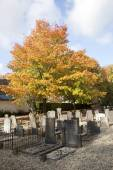 Graveyard and autumn colors — Stockfoto