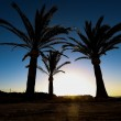 Three palm trees at sunset — Stock Photo