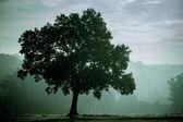 Tree in fog — Stock Photo