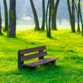 Bench in natural park — Stock Photo