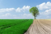 Plowed field and meadow — Stock Photo
