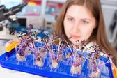 Woman studies genetic modified  plants — Stock Photo
