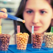 Girl in the laboratory of food quality tests  legumes grain — Stockfoto