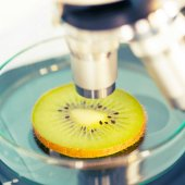 Kiwi fruit in a laboratory microscope — Stock Photo