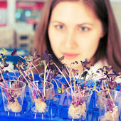Woman study of genetic modified GMO plants in the laboratory — Stock Photo