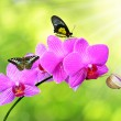 Purple orchid with butterflies — Stock Photo #52151199