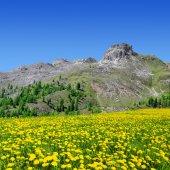 Val di Fassa — Stock Photo