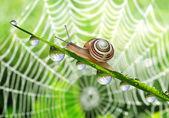 Snail on dewy grass — Stock Photo