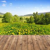 Paisaje de primavera — Foto de Stock