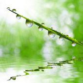 Dew drops — Stock Photo