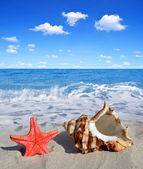 Concha con estrella de mar — Foto de Stock