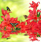 Lily with butterflies — Stock Photo