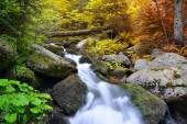 Autumnal forest with mountain creek — Stock Photo