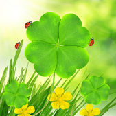 Clover leaf and ladybugs — Foto Stock