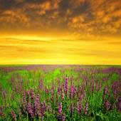 Spring flowering meadow — Stock Photo