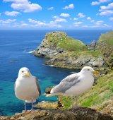 Seagulls — Stok fotoğraf
