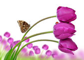 Fresh purple tulips with butterfly — Stock Photo