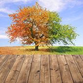 árbol de temporada — Foto de Stock