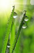 Dew drops closeup — Stock Photo
