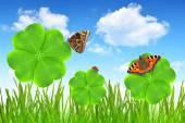 Clover blad och fjärilar — Stockfoto